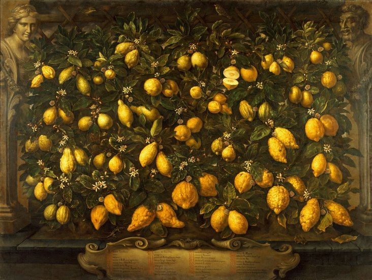 Lemons and Limes by Bartolomeo Bimbi